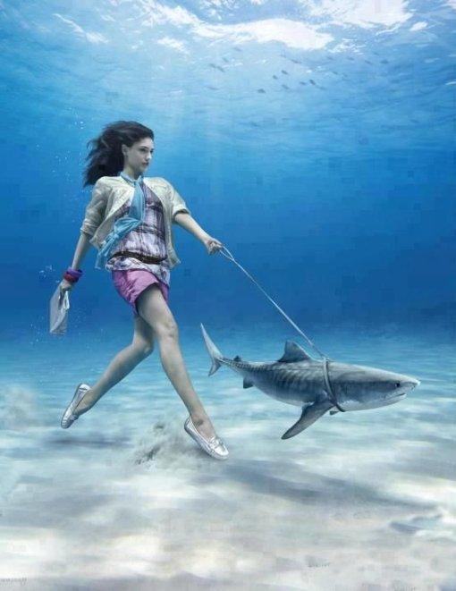 pet-shark